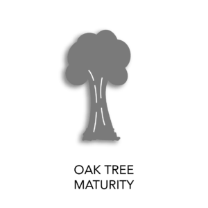 oak tree maturity